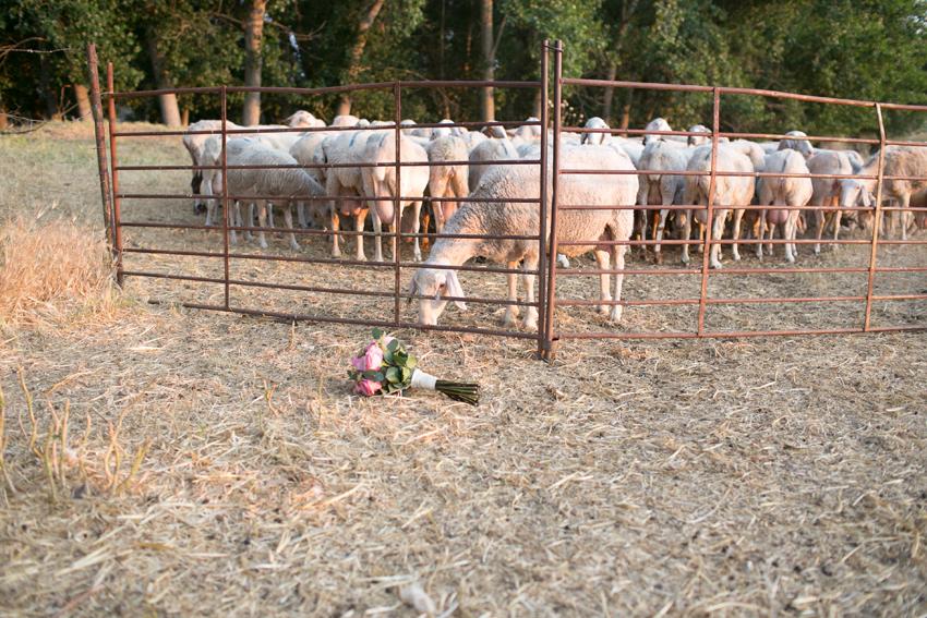 Imagen del ramo en el suelo, junto a unas ovejas. Fotos artísticas de bodas