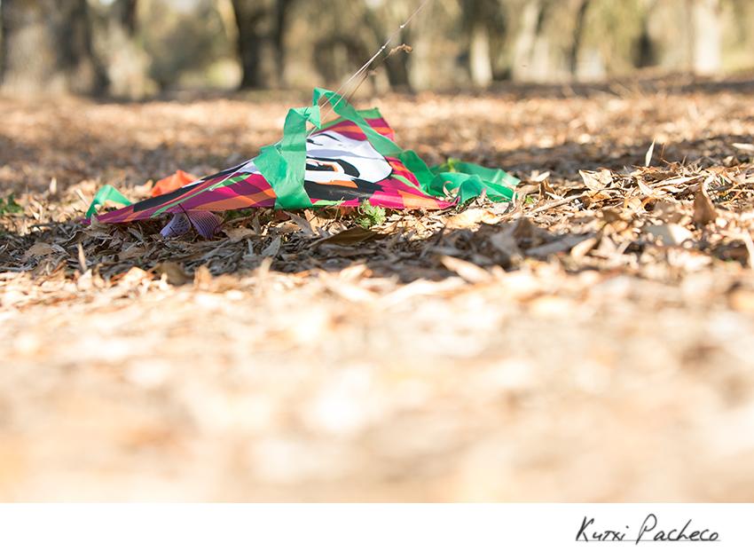 Cometa entre las hojas. Fotos de Otoño