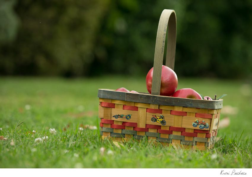 Cesto con manzanas. Kutxi Pacheco, fotógrafo de familias