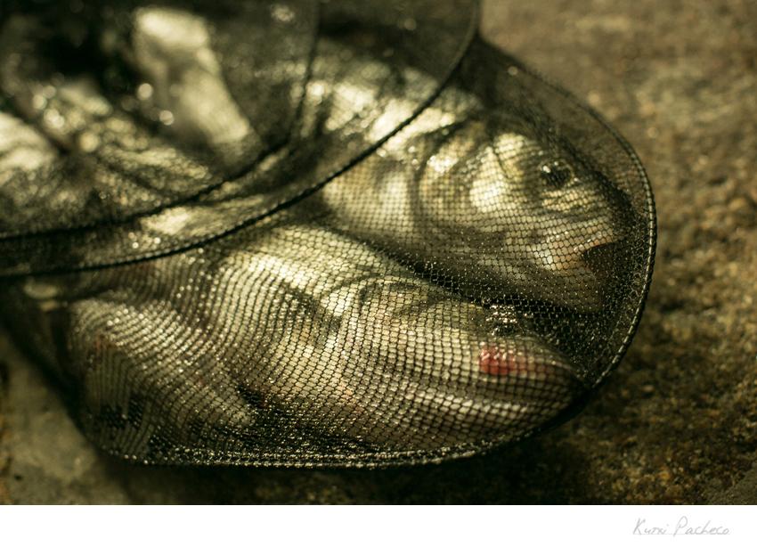 Pescado en una red. Imagenes de la Costa de la Muerte